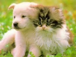 10 основных заповедей для владельцев домашних животных