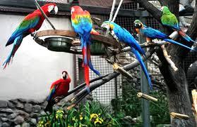 Клетки для длиннохвостых попугаев