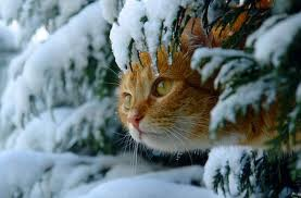 Кто любит холод...