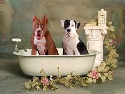 Чистка, мытье и купание собак