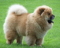 Диагностика собаки по состоянию шерсти