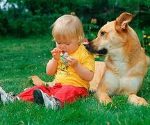 Если собака обижает ребенка