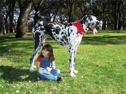 Инересные факты о собаках