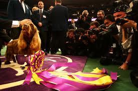 Первая собачья выставка