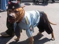 Приучение собаки к снаряжению