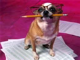 Рейтинг интеллектуальных способностей собак