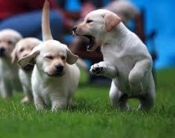 """Самые """"вредные"""" породы собак"""