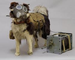 Собаки участники многочисленных войн