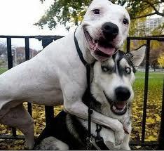 Заводить или не заводить собаку?